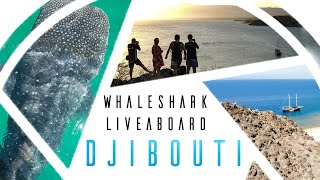 Whaleshark Liveaboard 2018 - Djibouti Swimming with whale sharks in Djibouti, best travel video.