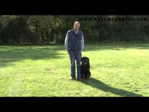 Dog Training. Rottweiler Basic Obedience