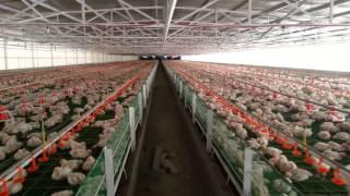 Rey Du Poultry Farm At Pililia Rizal Philippines