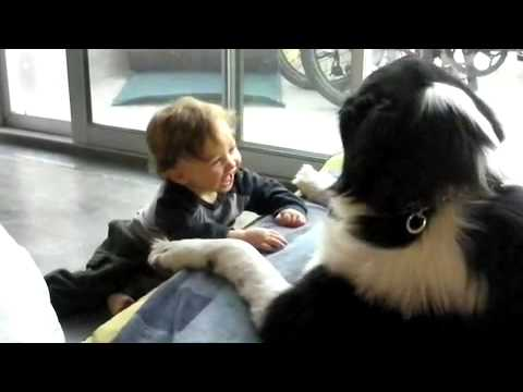 Baby Laughing Hysterically at Newfoundland Dog
