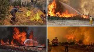 video: Devastating wildfires wreak 'incalculable' environmental damage across southern Europe