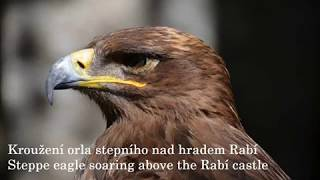 Unique video: Steppe eagle soaring over the Rabí castle / Orel stepní krouží nad hradem Rabí