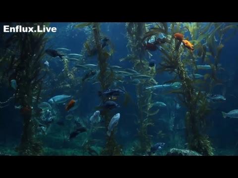lofi hip hop radio aquarium 24/7 - beats to work/study/chill