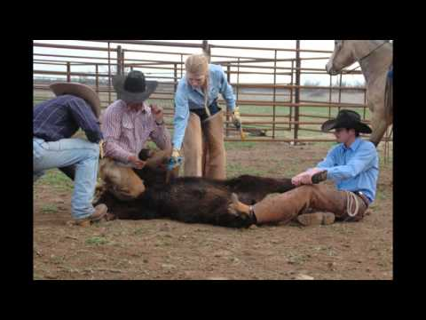 Spring Time for Cowboys: Branding Season ft. Easter Cattle Co.