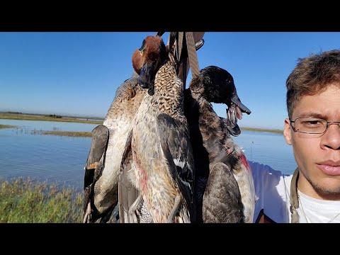 Duck Hunting Matagorda Marsh