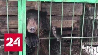 Крупные и опасные животные вне закона: владельцы попытаются от них избавиться - Россия 24