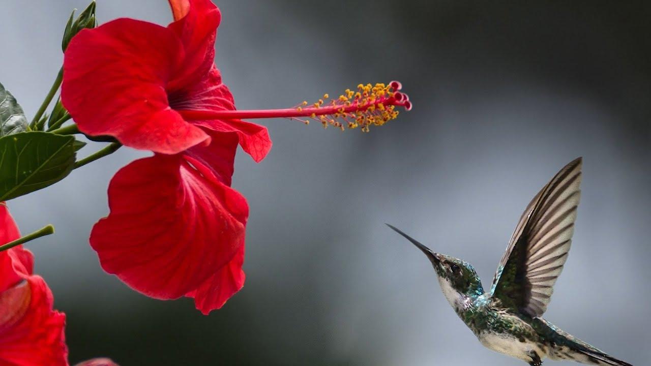 Peaceful Music Relxing Music Instrumental Music Beautiful Birds By Tim Janis