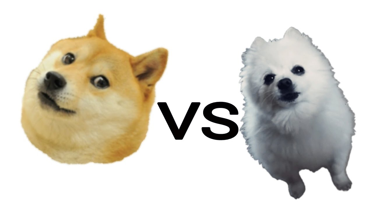Doge Vs Gabe The Dog Youtube
