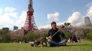 芝公園。東京タワー。ピータンがゴロンゴロンします。 すごく気持ちのい...