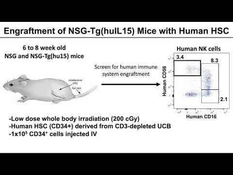 Transgenic Expression of Human IL15