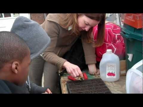Eleventh Grade:  Planting Seeds