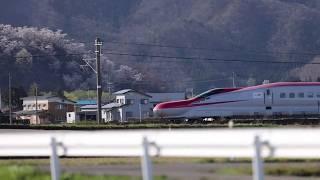 水仙の花からの…こまち号(秋田新幹線 在来線走行 201904_c)