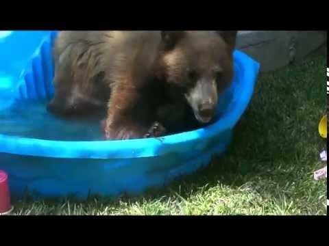 Bear in our backyard! Monrovia California