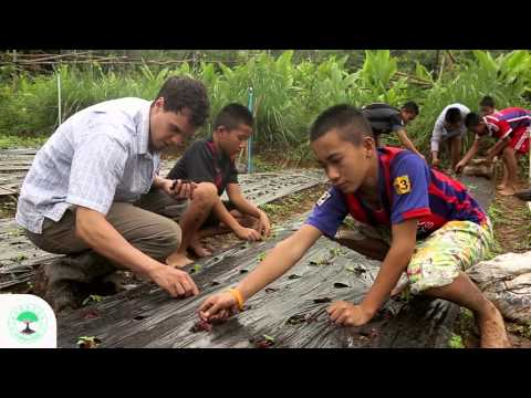 Organic Vegetable Farming With Hilltribe Children | CSD Thailand