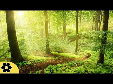 Healing Music, Meditation Music Relax Mind Body, Relaxing Music, Slow Music, ✿3049C