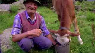 THE TALKING COW! - La Mucca Che Parla!
