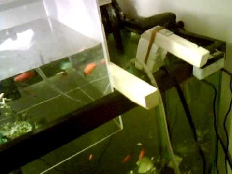 Modified 20 gallon aquarium inverted fish tank with for Inverted fish tank