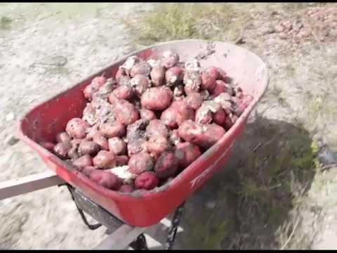 Jose Mai Scorns Agriculture Ministry over Potatoes