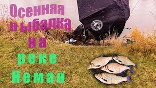 Осенняя рыбалка фидером на реке Неман Зимний фидер на реке Ловля язя и леща на фидер поздней осенью