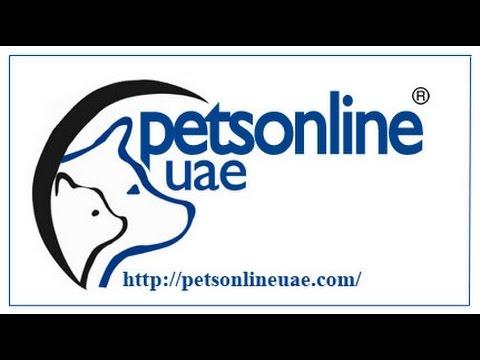 pet shops in dubai 1