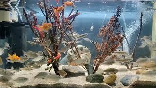 고추나무수족관