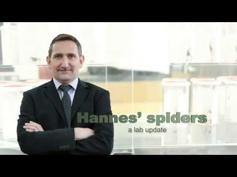 Hannes' spiders: Toward synthetic silk