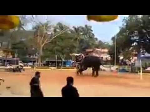 Elephant attack in kerala - YouTube