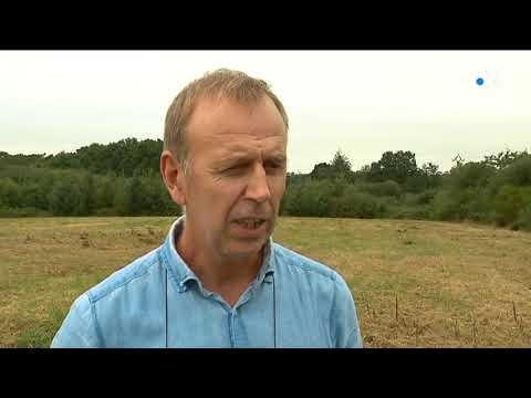 Le solaire se lève à l'ouest : une première ferme solaire va voir le jour dans le Morbihan
