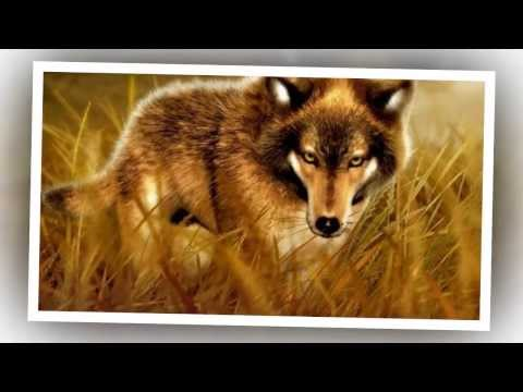 Sound Of The Wolves - Music and Nature Sounds For Relaxation