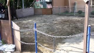 2012  年  6  月  24  日一般公開時撮影。 飼育員さんのうしろをついて...