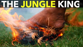 The Jungle King!