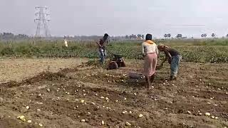 PUBERT ARO PRO With Potato Digger