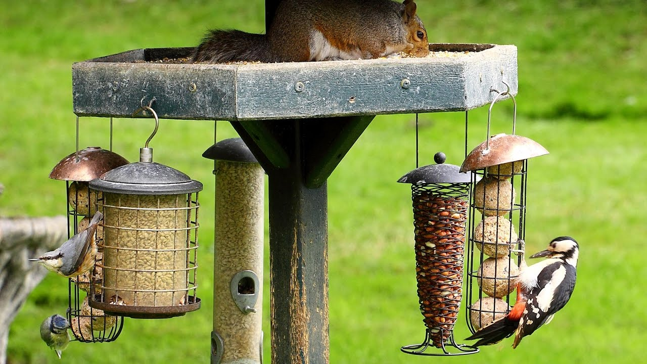 Bird Feeder Design || Garden Bird Feeders || Wooden Bird ...
