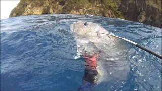 初めての経験ですが、フロートにぶら下げていたタコを、サメではなくロ...