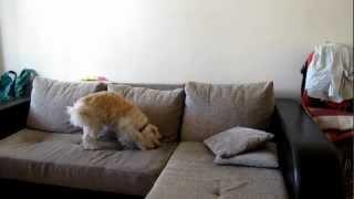 Вот чем занимается ваша собака когда вас нет дома! :)(, 2012-10-22T19:58:56.000Z)