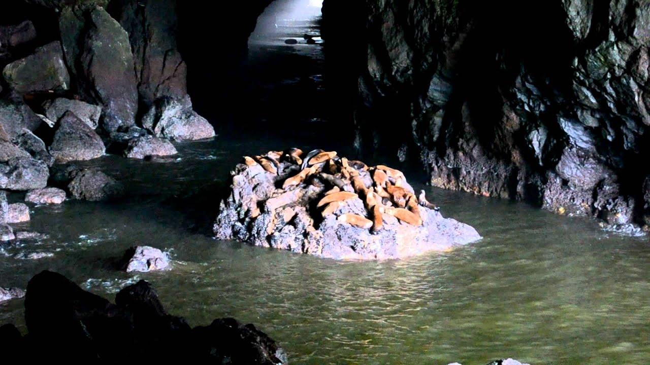 Sea Lion cave Florence Oregon - YouTube