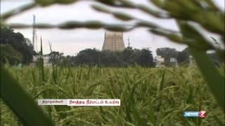 Seasonal rain profits rice cultivation in Tirunelveli | Tamil Nadu | News7 Tamil