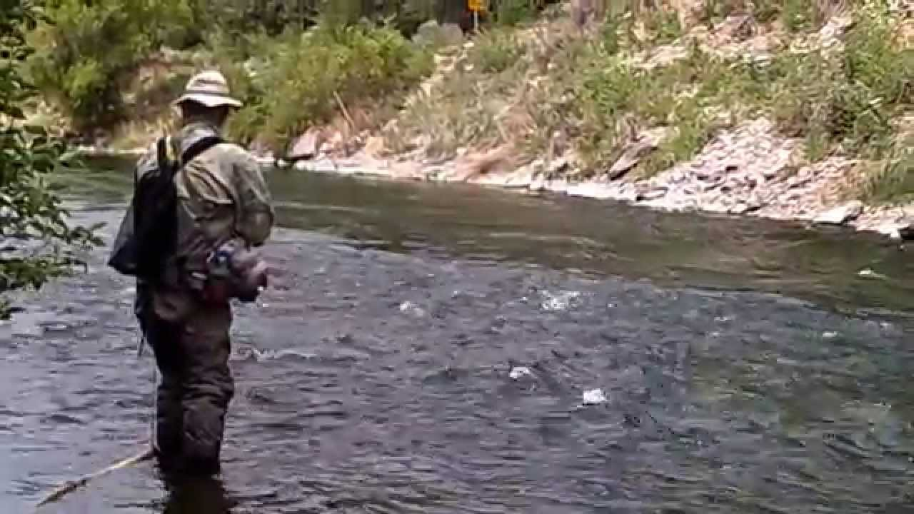 learn to fly fish the provo river, utah. catch big brown & rainbow, Fly Fishing Bait