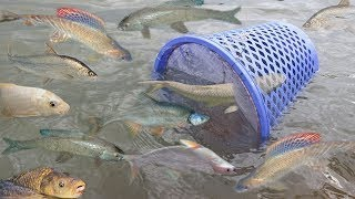Smart Girl Make Fish Trap Using Basket To Catch A Lot of Fish In Cambodia