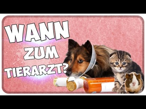 Wann zum Tierarzt / Tierklinik? Woran erkenne ich, dass mein Tier krank ist? Tipps!!