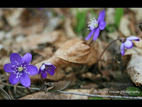 Kevad (Spring)