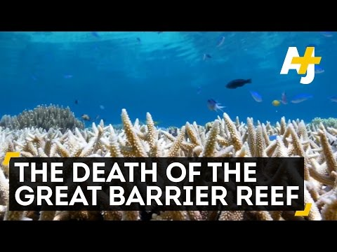 The Death Of The Great Barrier Reef