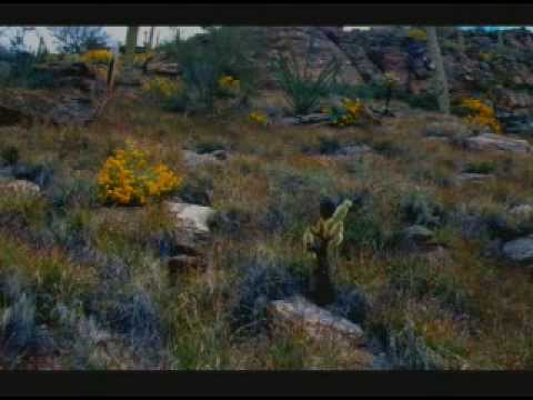 Sonoran Desert: Fragile Land of Extremes