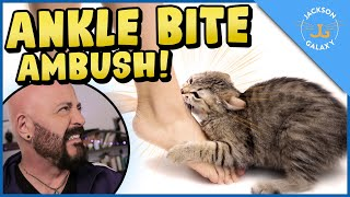 Cats Who Bite: Why Do Cats Bite & What You Can Do