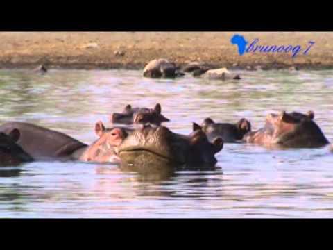LAGO NAIVASHA - Lake Naivasha - Kenia