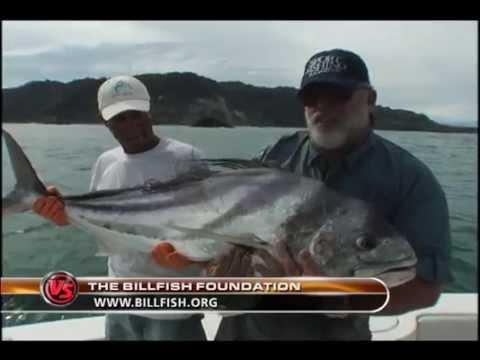 King Sailfish Mounts And The Billfish Foundation