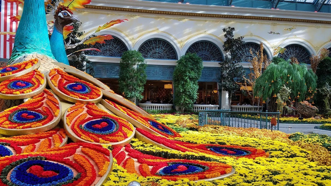 HARVEST SHOW, The Conservatory U0026 Botanical Gardens At Bellagio  Hotel..9.19.2017