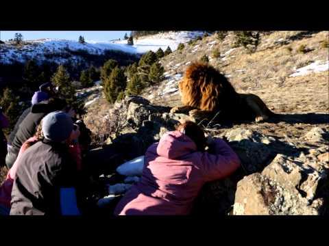 Montana Winter Wildlife Safari