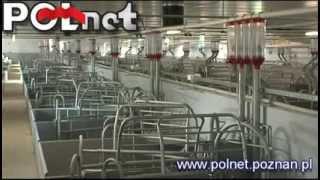 Sektor porodowy - ferma 5500 loch