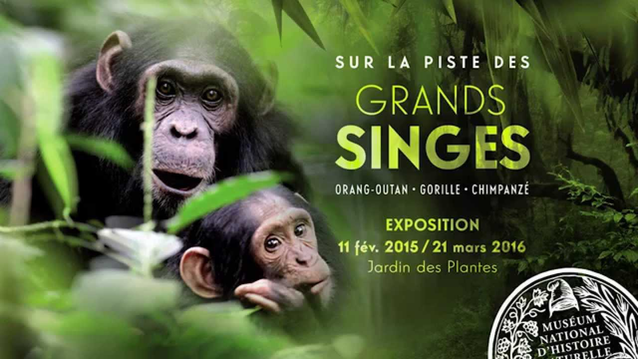 exposition sur la piste des grands singes jardin des plantes paris youtube. Black Bedroom Furniture Sets. Home Design Ideas